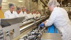 Bračke riblje konzerve na japanskom i ruskom tržištu, a uskoro će i u Kinu