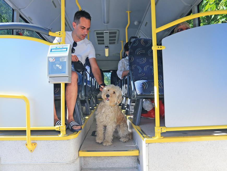 Dog friendly autobusi u Osijeku